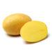 Soiul de cartof Bernina a fost creat de compania EUROPLANT Pflanzenzucht GmbH, Germania.